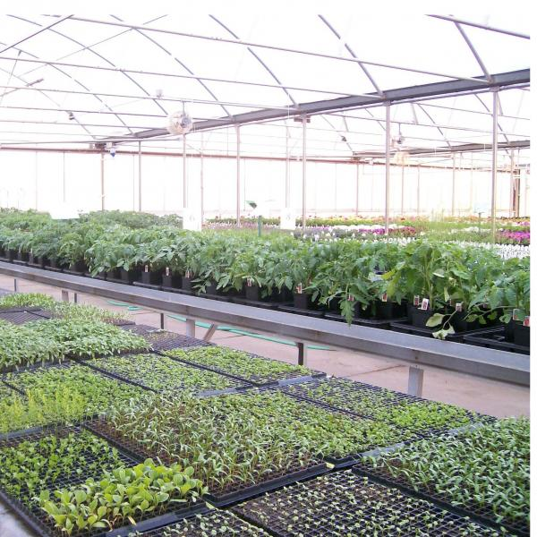 Krings Greenhouse and Nursery